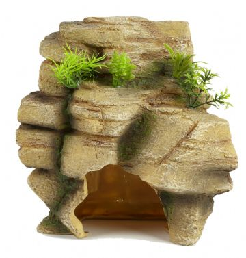 Pet Ting Rock with Plant